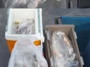 무창포---테티스호--- 7월 29일 (목요일) ----무창포체이스낚시----테티스호 5人 왕백조기조황