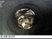 아산죽산지9/9일 수요일 조황 입니다